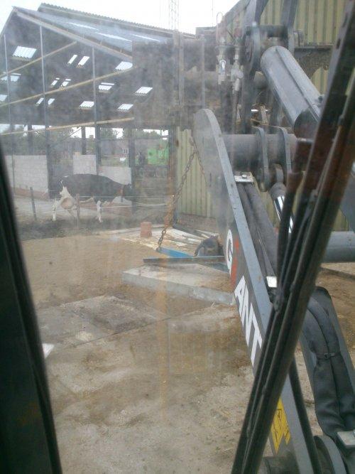 Foto van een Giant Meerdere, druk bezig met Poseren.. Geplaatst door Bob Hendriks op 06-10-2013 om 14:48:08, op TractorFan.nl - de nummer 1 tractor foto website.