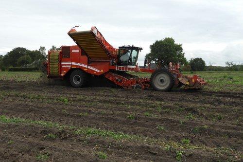 Aardappels rooien bij Evenhuis uit Giethoorn  https://youtu.be/X7Lxc69Zvhc. Geplaatst door pekkerietfan op 10-11-2019 om 18:02:43, op TractorFan.nl - de nummer 1 tractor foto website.