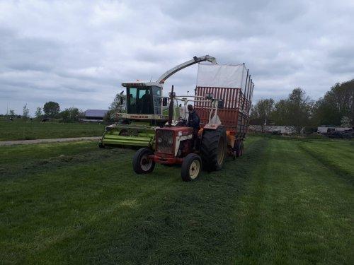 Foto van een International 624. Druk bezig met het eerste stukje gras hakselen met de