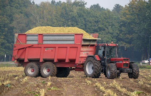 International Case 1056 XL met Vaia kipper van loonbedrijf Smits uit Stiphout. Geplaatst door Jack op 22-10-2015 om 22:37:16, met 3 reacties.