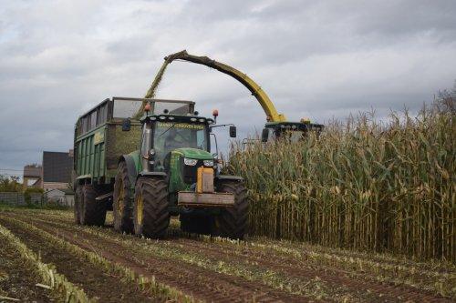 Hannes Verboven uit Zoersel mais hakselen voor boer Bens. Geplaatst door jd7920 op 04-11-2015 om 15:56:09, op TractorFan.nl - de nummer 1 tractor foto website.