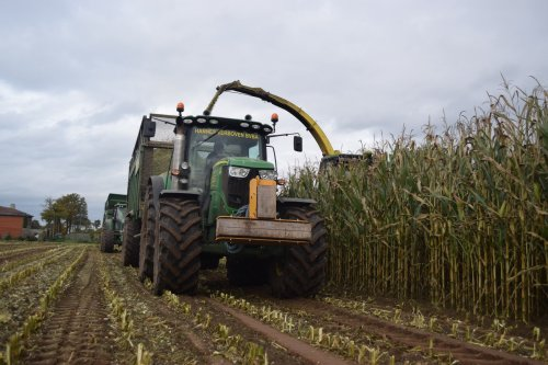 Hannes Verboven uit Zoersel mais hakselen voor boer Bens. Geplaatst door jd7920 op 04-11-2015 om 15:56:11, op TractorFan.nl - de nummer 1 tractor foto website.