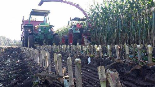 vorige week met de jongens de mais weer gehakselt  liep weer prima !. Geplaatst door mp-jd6620 op 05-10-2016 om 19:18:58, op TractorFan.nl - de nummer 1 tractor foto website.