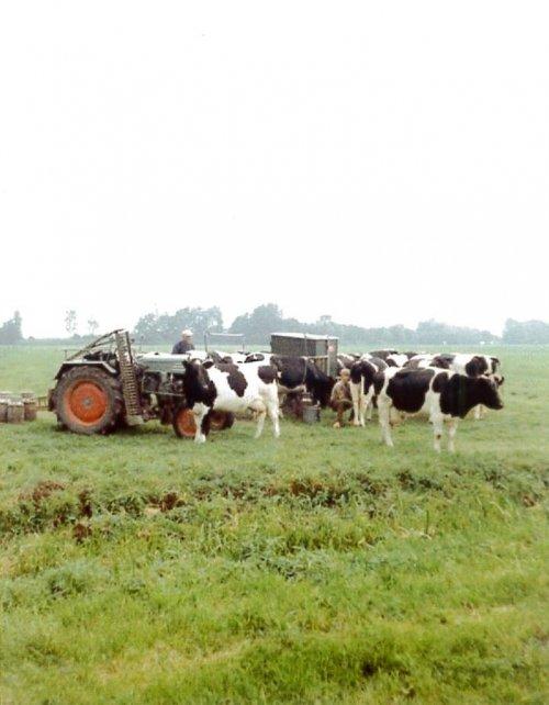 Een beeld dat je nu bijna nooit meer kan zien, Koeien melken in 't land, Deze foto is genomen in eind 60er jaren, De Kramer KL200 was een ideale trekker hiervoor, De trekker had nog geen hef, maar wel een brede vaste gatenbalk met tussenplaat, een extra melkbak was eenvoudig en dé-en monteren, daar in konden zeker een alles melkbussen en schoonwaterbus in voor het vervoer van de melk naar de boerderij
