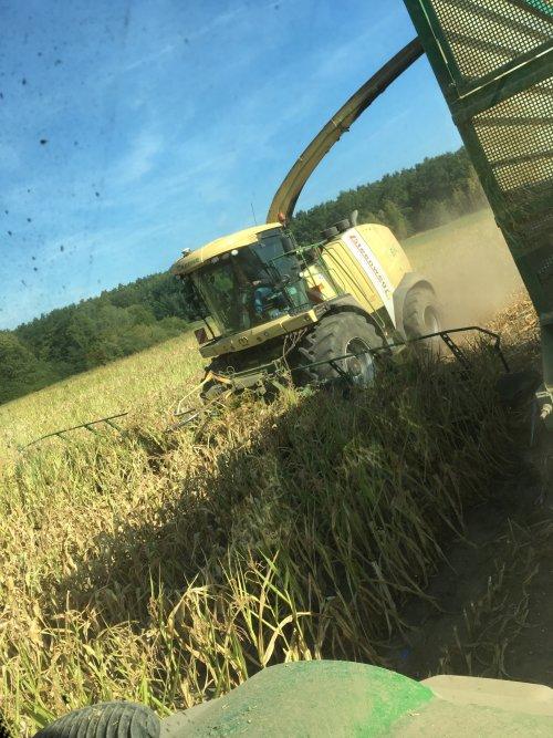 Foto van mijn uitzicht op de Krone Big X 1100 met 14-rijige maisbek. De mais was hier nog redelijk oke... Andere stukken stonden plantjes van 30 cm .