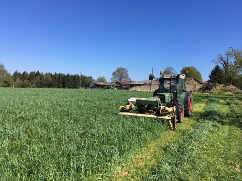 Vandaag grootste gedeelte van de Rogge/wikke gemaaid.  Dit perceel is na de mais ingezaaid in oktober. Eind februari doorgezaaid met gras/lucerne/klaver en kruiden.  Een ander perceel met Rogge/wikke/erwten heb ik in oktober ingezaaid na het ploegen wat ik straks ga inzaaien met mais zonder te ploegen. Het idee hier achter is dat er een betere vochthuishouding ontstaat voor de mais.  Momenteel weiden de koeien ook in de Rogge/wikke/erwten omdat we te kort aan weide gras hebben door de kou en droogte.