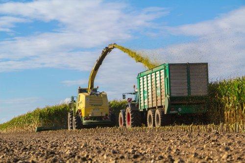 P&P Coenen uit Elmpt mais aan het hakselen met hun Krone Big X 1100 en Fendt 930 met Tebbe onder de pijp.