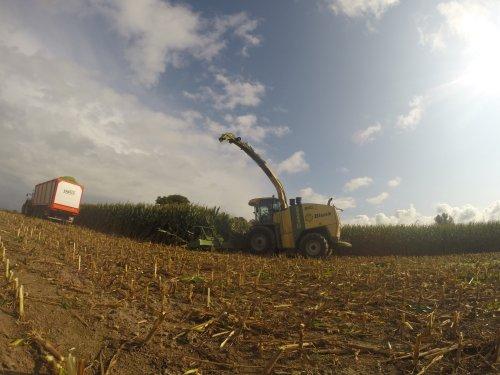 Foto van een Krone Big X 1100, bezig met maïs hakselen.. Geplaatst door casefordhenry op 29-09-2014 om 12:12:58, op TractorFan.nl - de nummer 1 tractor foto website.