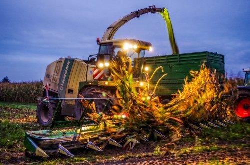 P&P Coenen uit Elmpt met hun Krone Big X 1100 met een 14 rijige maisbek in actie in de omgeving Mönchengladbach (D)  Morgen om 3uur meer op: http://www.jtnfotografie.nl