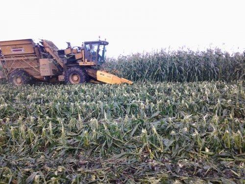 suikermais plukken. Geplaatst door christelthijssen op 25-11-2012 om 22:02:51, op TractorFan.nl - de nummer 1 tractor foto website.