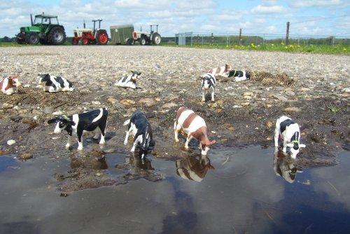 Foto van een Landbouw miniaturen 1:32 Dieren.. Geplaatst door fokje114 op 23-12-2010 om 15:40:19, met 10 reacties.