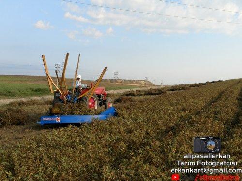 Chickpea Harvest With Massey Ferguson 135 & Özyücel Mower 2018...!!!. Geplaatst door alipasalierkan op 14-03-2019 om 16:38:22, met 5 reacties.