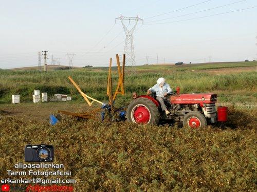 Chickpea Harvest With Massey Ferguson 135 & Özyücel Mower 2018...!!!. Geplaatst door alipasalierkan op 14-03-2019 om 16:38:23, met 3 reacties.