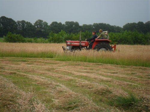 Foto van een Massey Ferguson 135, bezig met gras maaien.. Geplaatst door valyMF op 05-07-2013 om 07:53:09, op TractorFan.nl - de nummer 1 tractor foto website.