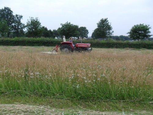 Foto van een Massey Ferguson 135, bezig met gras maaien.. Geplaatst door valyMF op 05-07-2013 om 07:54:35, op TractorFan.nl - de nummer 1 tractor foto website.