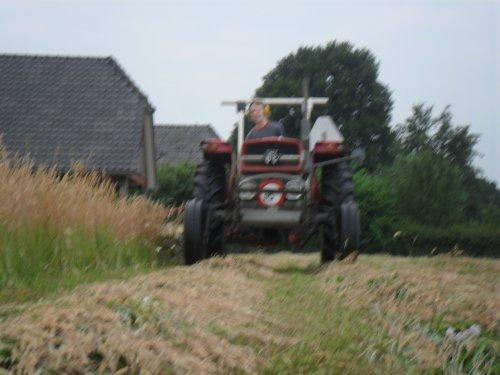 Foto van een Massey Ferguson 135, bezig met gras maaien.. Geplaatst door valyMF op 05-07-2013 om 07:54:58, op TractorFan.nl - de nummer 1 tractor foto website.