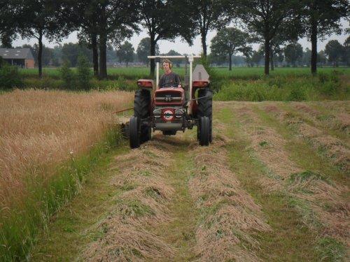 Foto van een Massey Ferguson 135, bezig met gras maaien.. Geplaatst door valyMF op 05-07-2013 om 07:55:40, op TractorFan.nl - de nummer 1 tractor foto website.