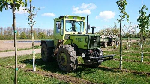 MB Trac 1000 in dienst van boomkwekerij Lappen uit het Duitse Kaldenkirchen. Bedrijf heeft een flinke vloot MB tracs in dienst.