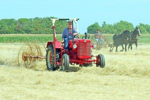 Foto van een Mc-Cormick D 217 tijdens hooi oogstdag van Landbouw Historie Texel. Geplaatst door AW217 op 11-07-2018 om 22:42:22, met 5 reacties.