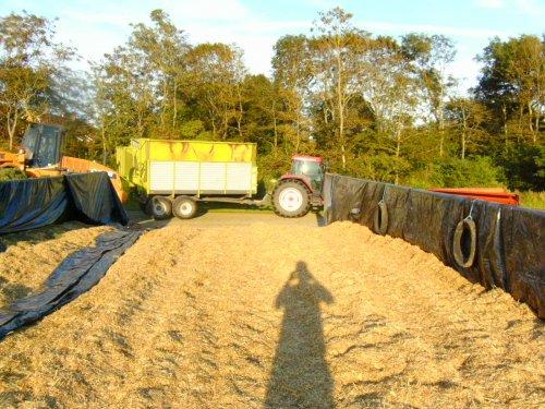 Foto van een Mc-Cormick MTX 175, bezig met gras inkuilen.. Geplaatst door marcelihc844s op 03-08-2011 om 20:36:43, op TractorFan.nl - de nummer 1 tractor foto website.