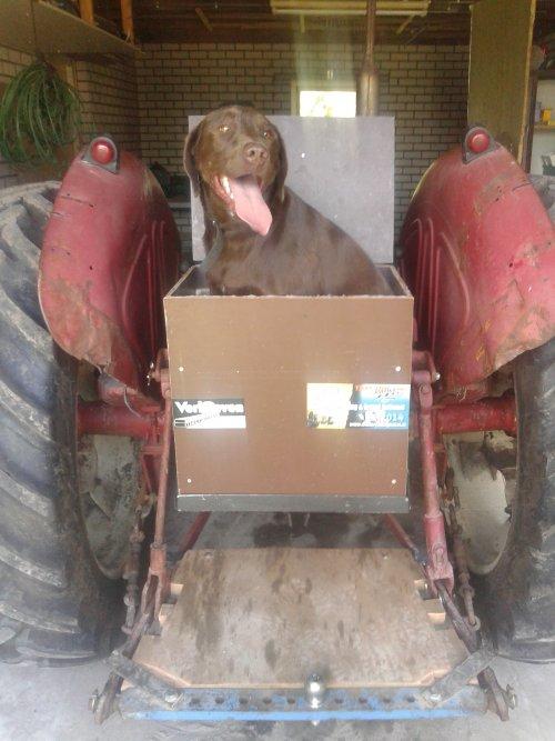 Foto van een Mc-Cormick D 440, druk bezig met Poseren. Bakje voor onze hond Ollie gemaakt. Nou hopen dat de tractor geen olie meer lekt; p.