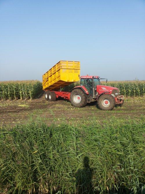 Mc-Cormick MTX 165, Loonbedrijf Huismans druk bezig met Mais hakselen. Geplaatst door patrickjd6230 op 18-09-2014 om 15:53:52, met 4 reacties.