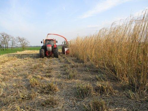 Foto van een Mc-Cormick MTX 215 Miscanthus hakselen. Geplaatst door wim-same op 11-04-2016 om 20:00:33, op TractorFan.nl - de nummer 1 tractor foto website.