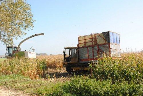 Foto van een Mitsubishi Rupsdumper, bezig met maïs hakselen.. Geplaatst door hansie op 07-10-2011 om 18:34:35, met 2 reacties.