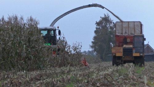 Mitsubishi rupsdumper aan het meerijden met Mais hakselen.. Geplaatst door Mike2002 op 31-10-2015 om 10:27:39, op TractorFan.nl - de nummer 1 tractor foto website.