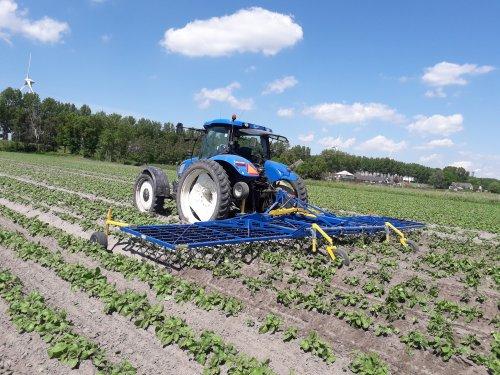 Biologische pootaardappelen aan het wiedeggen. Geplaatst door t6030power op 09-10-2019 om 22:08:41, op TractorFan.nl - de nummer 1 tractor foto website.