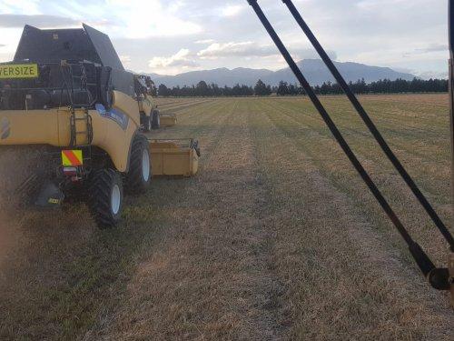 extreem vroeg ras, prairie grass.. Geplaatst door NZDairy op 29-12-2020 om 10:22:49, op TractorFan.nl - de nummer 1 tractor foto website.