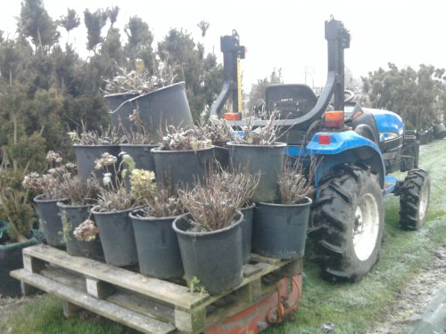 Foto van een New Holland TC21D.  Special transport!. Geplaatst door wouterk op 03-12-2010 om 19:54:02, met 35 reacties.