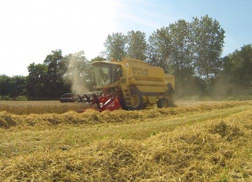 Foto van een New Holland TX 62, bezig met maaidorsen.. Geplaatst door _-_Bluepower_-_ op 21-08-2013 om 21:08:45, op TractorFan.nl - de nummer 1 tractor foto website.