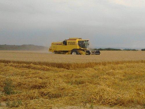 Foto van een New Holland TX 62,  Caenen-Partoens uit Veldtwezelt. Geplaatst door FiatPeter op 01-09-2013 om 13:23:21, op TractorFan.nl - de nummer 1 tractor foto website.