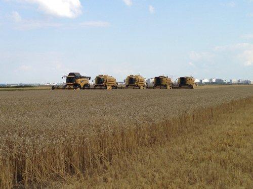 Loonbedrijf RVR Hoofddorp met 5 combines op 1 stuk. cx8050 2xtx67 2xtx36. Geplaatst door roelie91 op 15-12-2013 om 14:31:00, op TractorFan.nl - de nummer 1 tractor foto website.