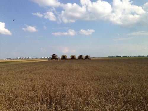 Loonbedrijf RVR Hoofddorp met 5 combines op 1 stuk. cx8050 2xtx67 2xtx36. Geplaatst door roelie91 op 15-12-2013 om 14:31:04, op TractorFan.nl - de nummer 1 tractor foto website.