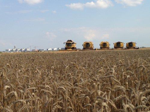 Loonbedrijf RVR Hoofddorp met 5 combines op 1 stuk. cx8050 2xtx67 2xtx36. Geplaatst door roelie91 op 15-12-2013 om 14:31:08, op TractorFan.nl - de nummer 1 tractor foto website.