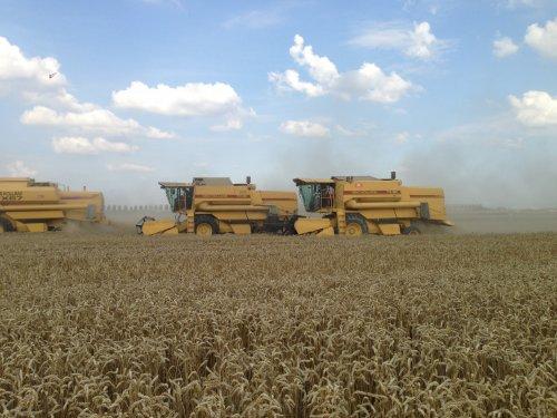 Loonbedrijf RVR Hoofddorp met 5 combines op 1 stuk. cx8050 2xtx67 2xtx36. Geplaatst door roelie91 op 15-12-2013 om 14:31:15, op TractorFan.nl - de nummer 1 tractor foto website.