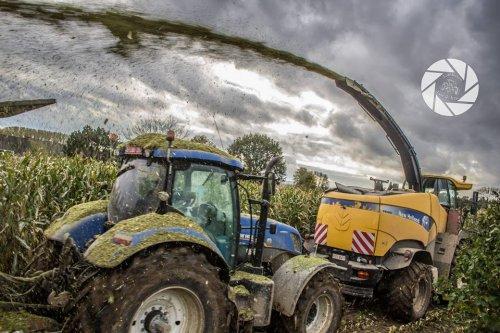 Foto van een New Holland Meerdere, bezig met maïs hakselen toestemming gekregen op facebook! ;). Geplaatst door trekkerfoto's13 op 26-12-2013 om 18:26:06, met 3 reacties.