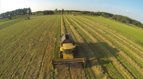 New Holland CX 840 aan het graszaad dorsen in Wijchen nabij nijmegen.. Geplaatst door johnnyboy op 17-07-2014 om 12:16:13, op TractorFan.nl - de nummer 1 tractor foto website.