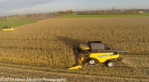 Een New Holland CR8080 maïs aan het dorsen op de New Holland demo in Hoogstraten (B) op de achtergrond rijdt een New Holland CX5090.