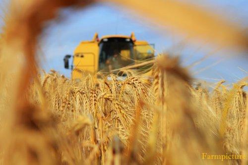 Foto van een New Holland TX 66, bezig met maaidorsen.. Geplaatst door Jan Ramon op 04-07-2015 om 21:07:46, op TractorFan.nl - de nummer 1 tractor foto website.