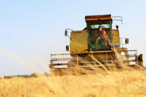 Foto van een New Holland 8080, bezig met maaidorsen.. Geplaatst door Jan Ramon op 09-07-2015 om 21:43:57, op TractorFan.nl - de nummer 1 tractor foto website.