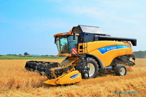 Foto van een New Holland CX 8070, bezig met maaidorsen.. Geplaatst door Jan Ramon op 11-07-2015 om 12:50:20, op TractorFan.nl - de nummer 1 tractor foto website.