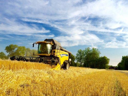 Foto van een New Holland CX 7090, druk bezig met Maaidorsen.. Geplaatst door johndeerefendtfan op 12-07-2015 om 10:50:32, op TractorFan.nl - de nummer 1 tractor foto website.
