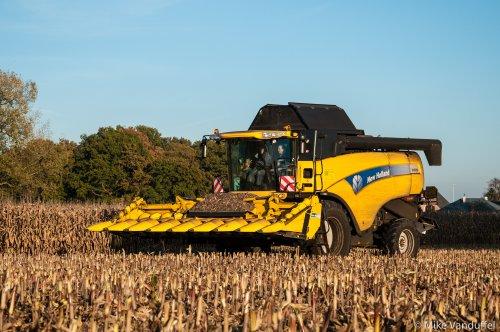 Zondag is rustdag? Zelfs als die zondag een feestdag is gaat het gewoon door!  New Holland CX 8050 Agrarische werken Cuyvers - Neerpelt (B)