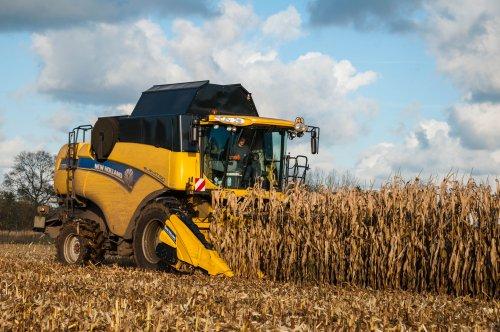Onder een prachtige herfstzon!  New Holland CX 7090 Loonbedrijf Vanbuel - Peer (B). Geplaatst door mike_v op 26-11-2015 om 23:24:46, op TractorFan.nl - de nummer 1 tractor foto website.