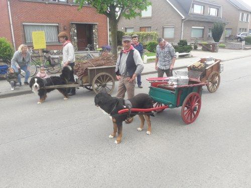 Hondenkarren,er waren mensen die dit nooit eerder gezien hadden zondag in de folklorestoet in Beveren waas.
