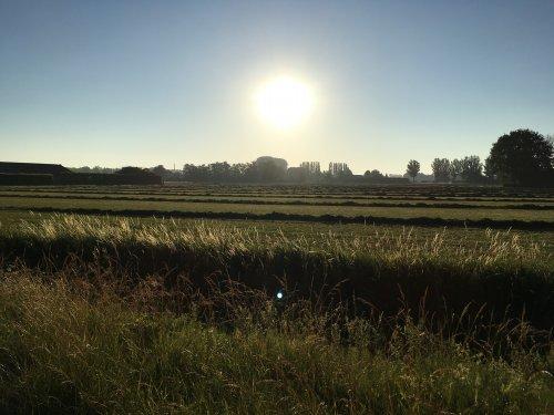s'ochtends om half zeven aankomen en dit is mijn zicht. Geplaatst door Jochem Westerhof op 30-06-2019 om 13:44:25, op TractorFan.nl - de nummer 1 tractor foto website.