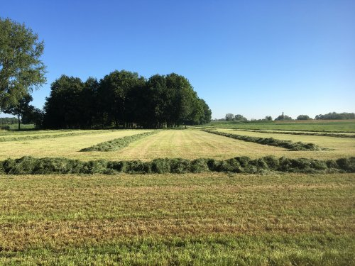 Foto van een Grasveld met zwaden.. Geplaatst door Jochem Westerhof op 30-06-2019 om 13:44:34, op TractorFan.nl - de nummer 1 tractor foto website.